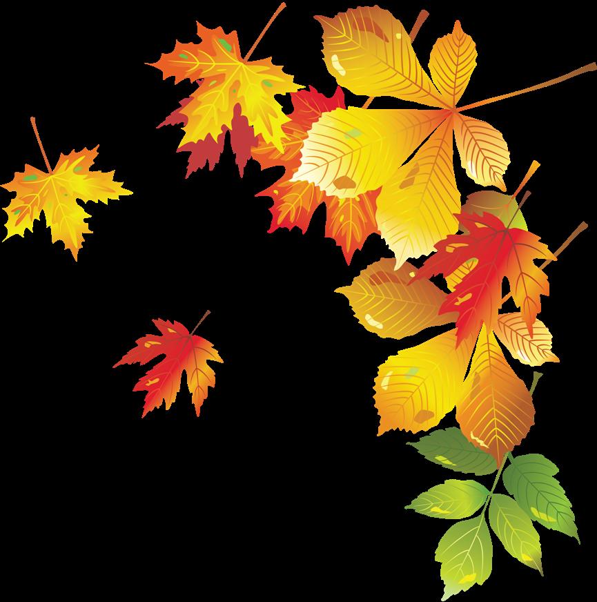 осенние листья для фотошопа срочно